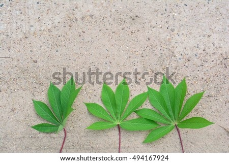 green leaves and cement floor #494167924