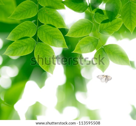 Green leaves and flying butterfly  in the  sunlight