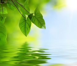 green leaves and reflection in water, selective focus