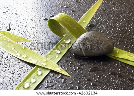 Green leaves and stones, drops of water in a dark background.