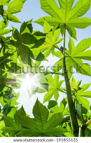 Green leaves and sun #191855135