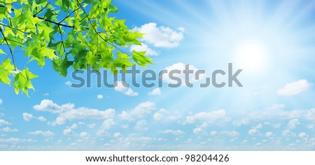 Green leaves and the sun on the sky background.