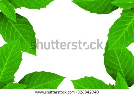 Green leaves and white background in my home #326842940
