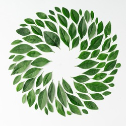 Green leaves arranged in spiral shape on white background. Flat lay.