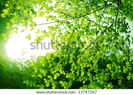 green leaves attracted to sun