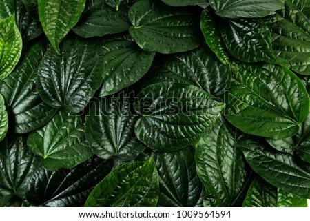 green leaves background - Shutterstock ID 1009564594