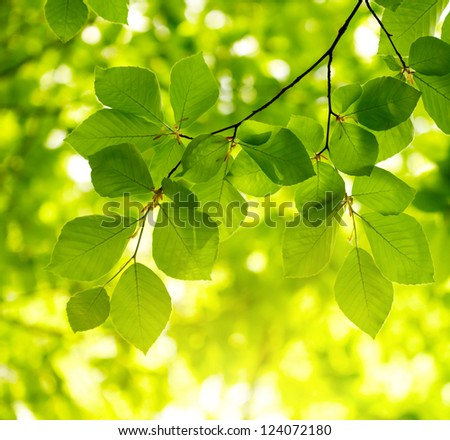 Green leaves background #124072180