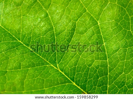 Green leaves background #159858299