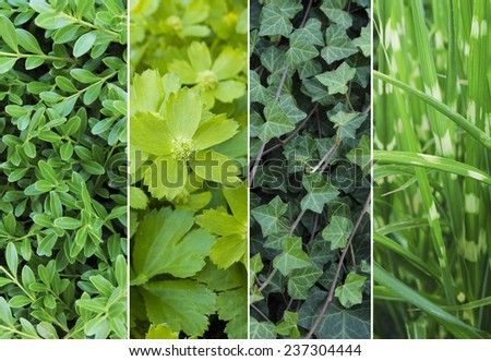 Green leaves background #237304444