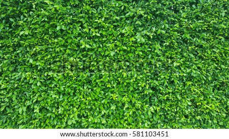 Green Leaves background #581103451
