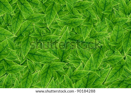 Green leaves background, A nature green concept.