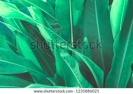 Green Leaves background,Creative layout made of green leaves. Flat lay. Nature concept #1235886025
