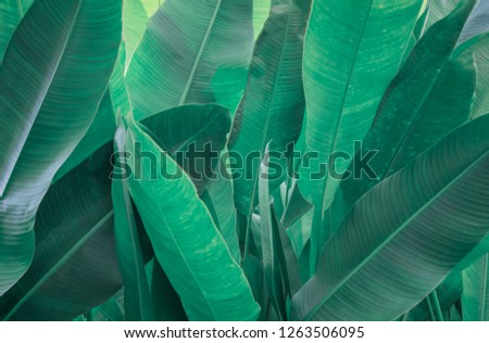 Green Leaves background,Creative layout made of green leaves. Flat lay. Nature concept #1263506095