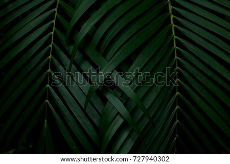 Green leaves background. Green leaves color tone dark  after raining in the morning.  #727940302