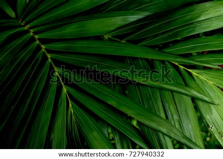 Green leaves background. Green leaves color tone dark  after raining in the morning.  #727940332