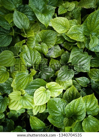 green leaves background, leaves background, leaves texture #1340704535