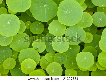 Green leaves background - The round shape