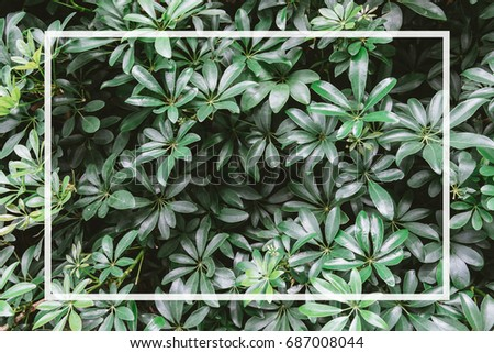 Green leaves background with copyspace in white frame #687008044
