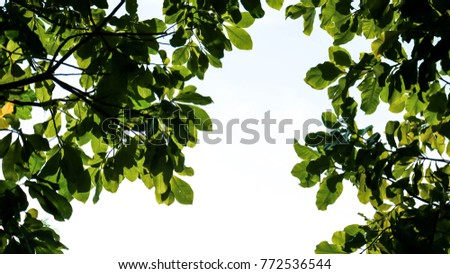 Green Leaves foreground #772536544