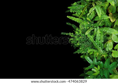 Green leaves forest plants after rain on black background, tropical rainforest concept #474063829