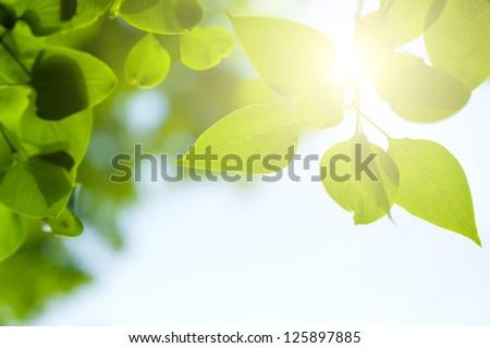 Green leaves frame - stock photo