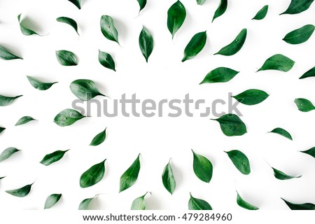 green leaves frame on white background. flat lay. #479284960