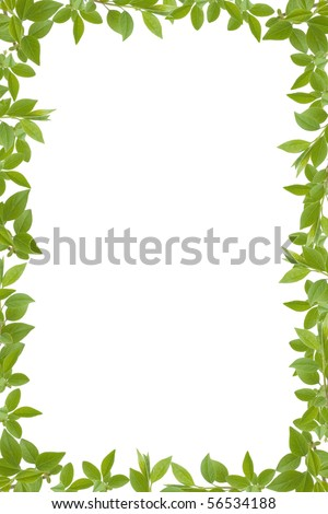 green leaves frame with white background, copy space