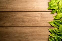 Green leaves framing on wooden floors.