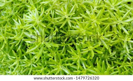 Green leaves, green background, green garden. #1479726320