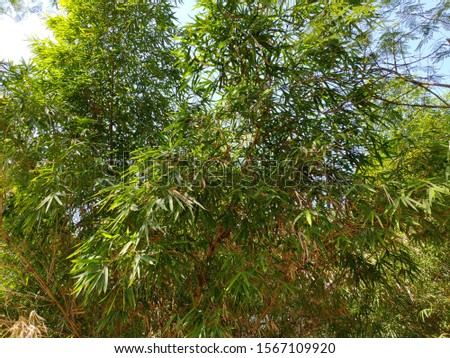 Green leaves, Green tree, Green background
