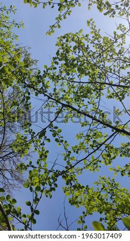 Green leaves in blue sky background Stok fotoğraf ©