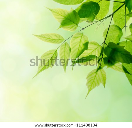 Green leaves in forest