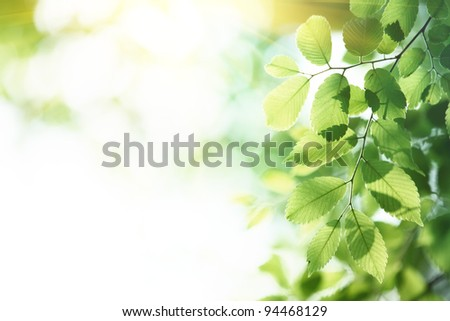 Green leaves in morning,natural background.