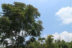 Green leaves in the dry season, still look cool under the hot sun, a number of bamboo trees, mindi trees, and various other trees as the best oxygen-producing alternative in the dry season, the clear