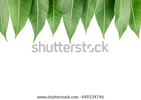 Green Leaves Isolated Background With Space For Word 449234746