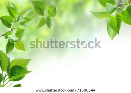 green leaves isolated on white #71580544