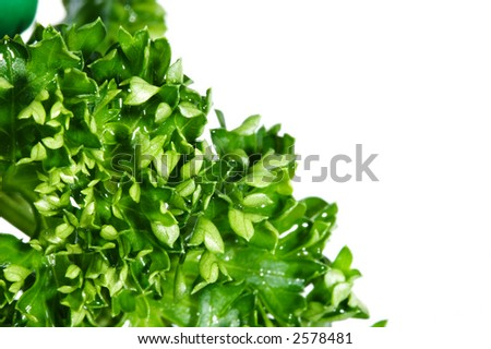 Green leaves isolated over white background