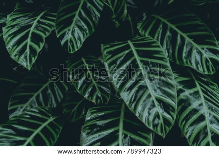 Green leaves. Low key modern style toned background image - Shutterstock ID 789947323