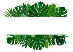 Green leaves nature frame layout of tropical plant bush (monstera, palm, philodendrons, ferns) on white background, flat lay