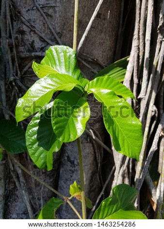 Green leaves, nature of leaves #1463254286