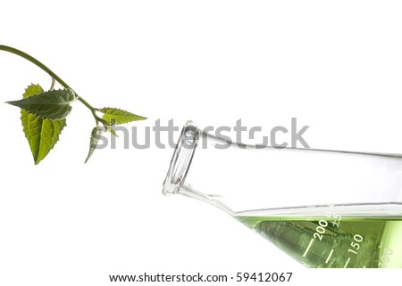 Green leaves next to an erlenmeyer flask with a green liquid in it.