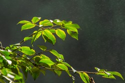 Green leaves of a bush near the Datanla waterfall in the morning, Dalat, Vietnam