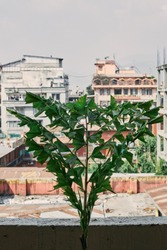 Green leaves of palm growing in a pot on cities under construction, alternative recycling concept.