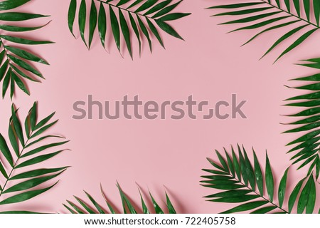green leaves of palm tree on bright background