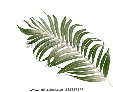 Green leaves of palm tree on white background - Shutterstock ID 535837297