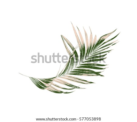 Green leaves of palm tree on white background #577053898