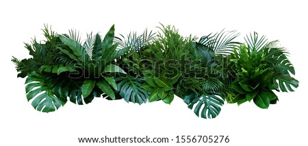 Green leaves of tropical plants bush (Monstera, palm, fern, rubber plant, pine, birds nest fern) floral arrangement indoors garden nature backdrop isolated on white background, clipping path included.