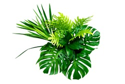 Green leaves of tropical plants bush (Monstera, palm, rubber plant, pine, bird's nest fern) floral arrangement indoors garden nature backdrop isolated on white background thailand, clipping path.