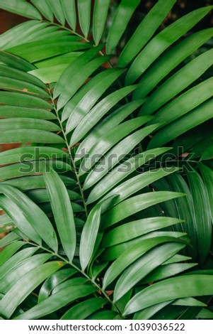 green leaves of tropical plants, texture. close up #1039036522