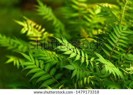 Green leaves on a green background. Green leaves close up